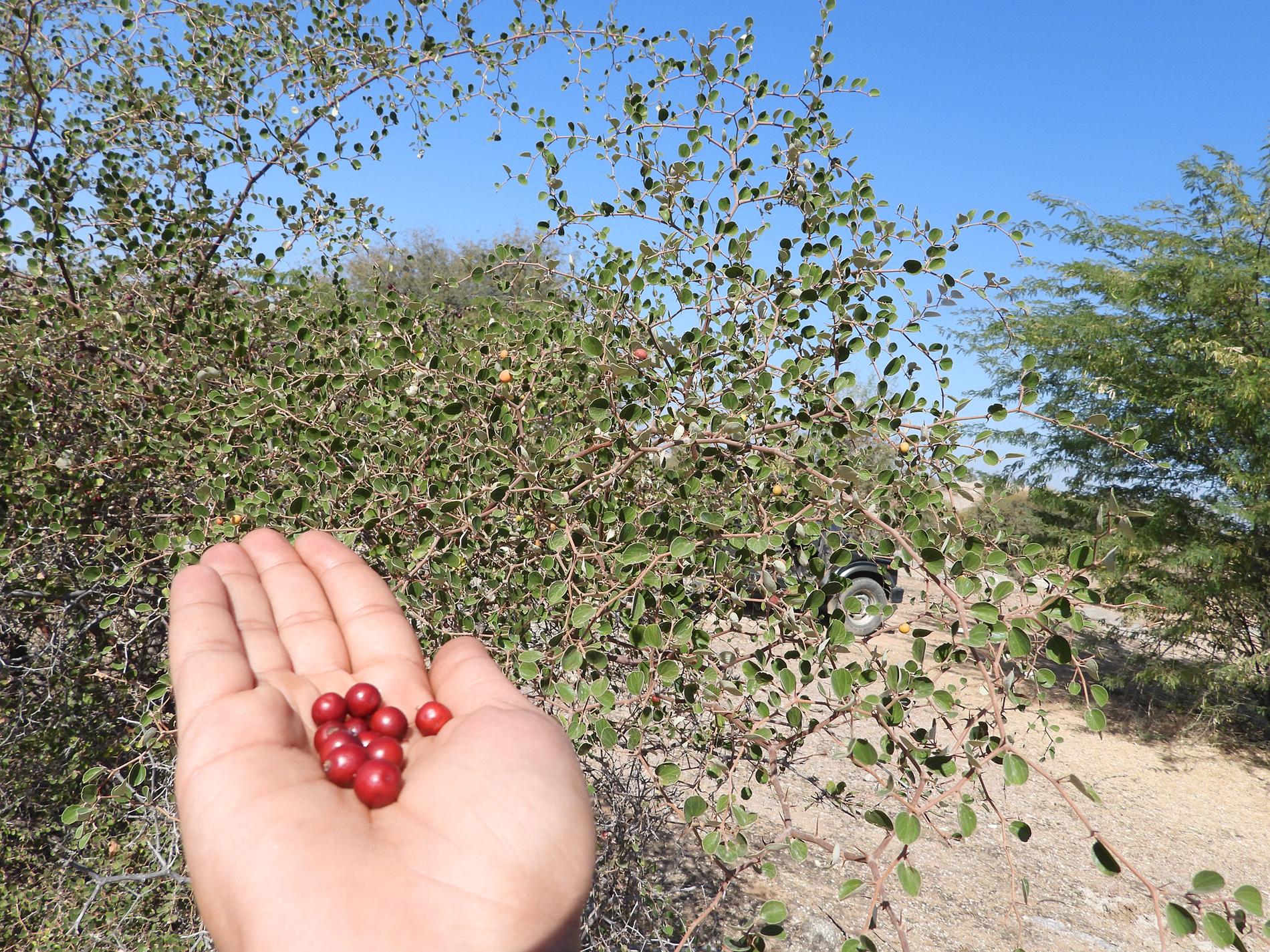 The flora of Jawai
