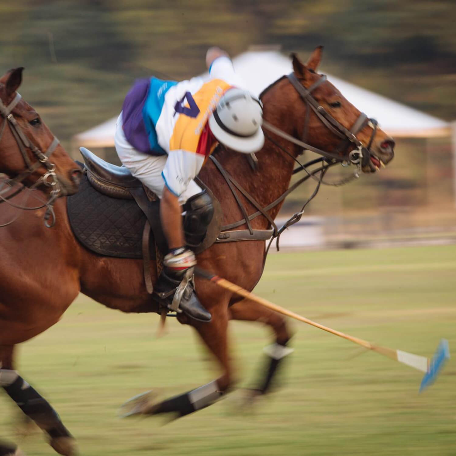 The Royal Polo Experience